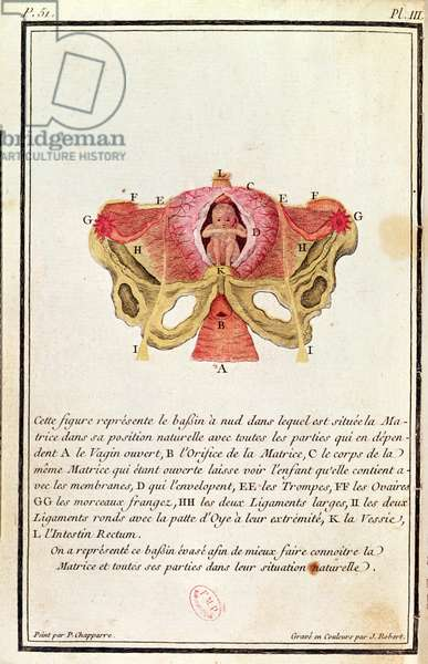 Cross-sectional diagram of the womb, from a book by Madame Angelique Le Boursier du Coudray (1714-94) engraved by J. Robert, 1783 (coloured engraving)