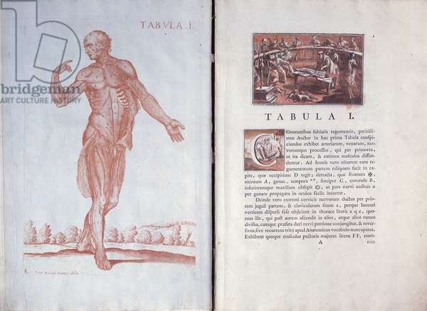 Plate 1 from 'Tabulae Anatomicae', Rome, 1788 (engraving)