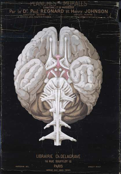 The Brain, from 'Planches Murales d'Anatomie et de Physiologie' by Dr. Paul Regnard and Henry Johnson (oil on canvas)
