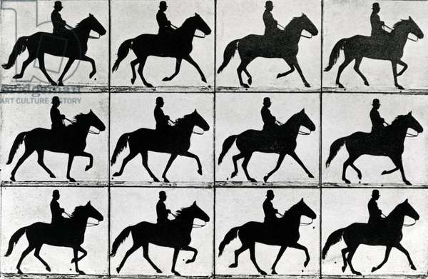 One Stride in Eleven Phases, 1881, illustration from 'Animals in Motion' by Eadweard Muybridge, 1907 edition (b/w photo)