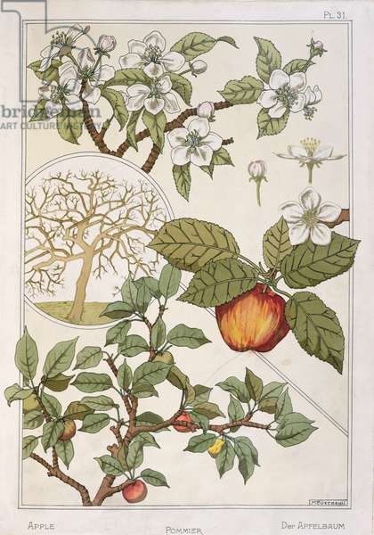 Apple Tree, Fruits and Flowers, from 'Encyclopédie Botanique', c.1900 (colour litho)
