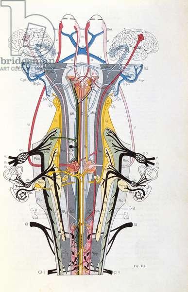 Fig. 212 from 'Semiologie des Affections du Systeme Nerveux' by J. Dejerine, 1914 (colour litho)