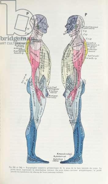 Fig. 381 & 382 The nervous system, from 'Semiologie des Affections du System Nerveux' by J. Dejerine, 1914 (colour litho)
