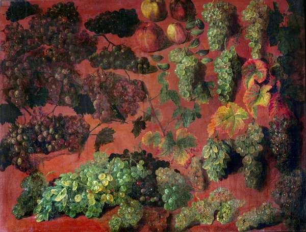 Still Life with Bunches of Grapes (oil on canvas)
