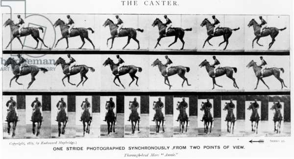 The Canter: One Stride Photographer Synchronously from Two Points of View, 1887, illustration from 'Animals in Motion' by Eadweard Muybridge, 1907 edition (b/w photo)