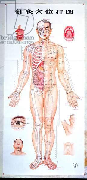 Chart showing acupuncture points, 1971 (colour engraving) (see also 164280)