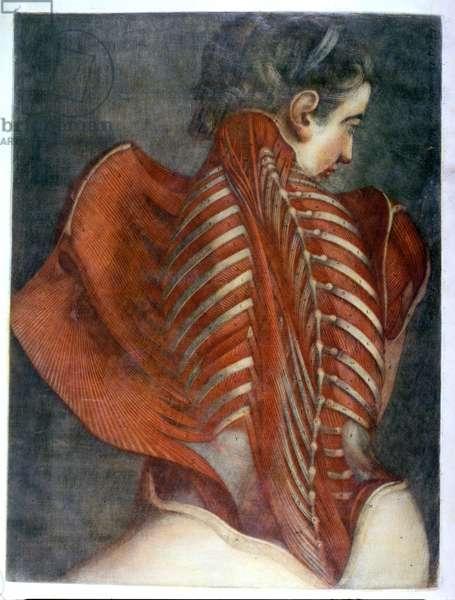 'The Flayed Angel', from 'Myologie Complette en Couleur et Grandeur Naturelle', 1746 (mezzotint)