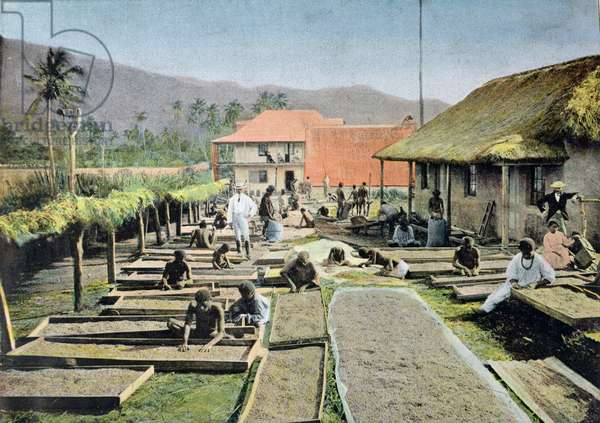 Kanaks preparing the coffee harvest in Calana, New Caledonia, early 20th century (colour litho)