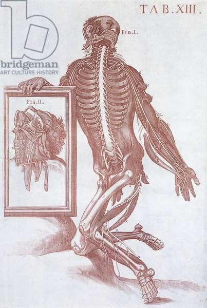 Anatomical figure, from 'Tabulae Anatomicae', Rome, 1788 (engraving)
