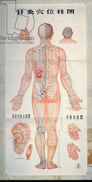 Chart showing acupuncture points for the back and for the ear, 1971 (colour engraving) (see also 164279)