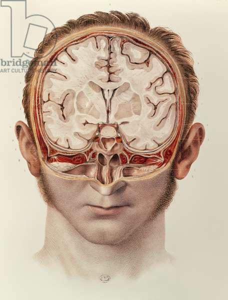 The Brain, plate from 'Traite Complet de l'Anatomie de l'Homme' by Jean-Baptiste Marc Bourgery (1797-1849) 1866-67 (coloured engraving)