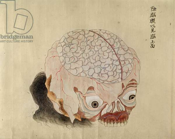 The anatomy of the brain from the dissection of a torture victim of 1796, from a makimono of a Midori doctor, 1842 (pen & ink and w/c on paper)