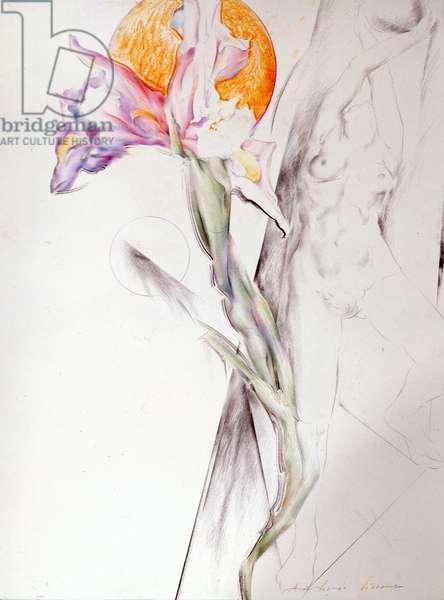 Iris - Composition II