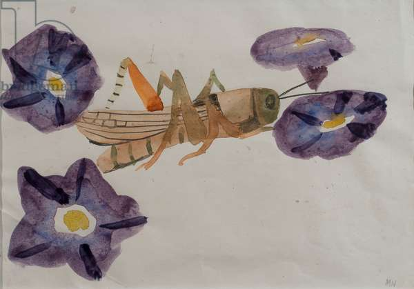 Grasshopper and Morning Glory (w/c on paper)