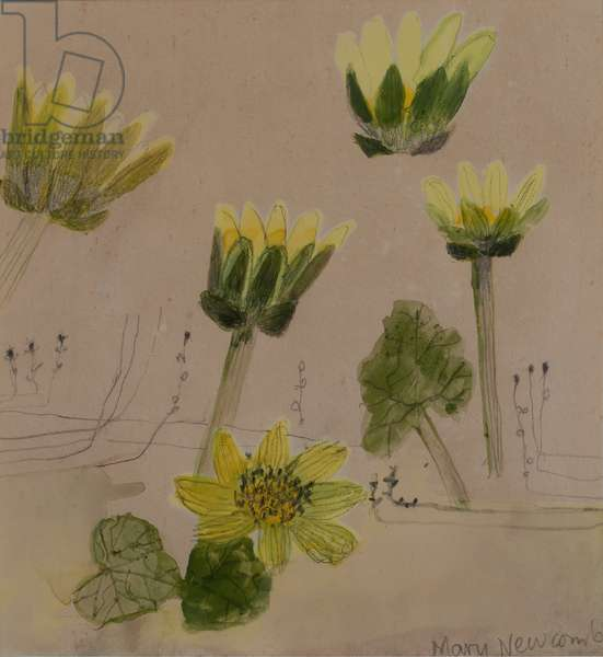 Daisies (w/c on paper)