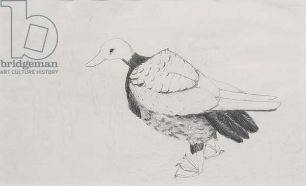 Duck (pencil on paper)