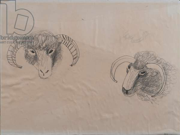 Two Sheep, c.1985 (pencil & wash on paper)