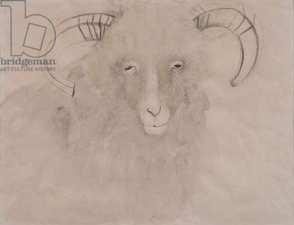 Old Ewe (pencil & wash on paper)