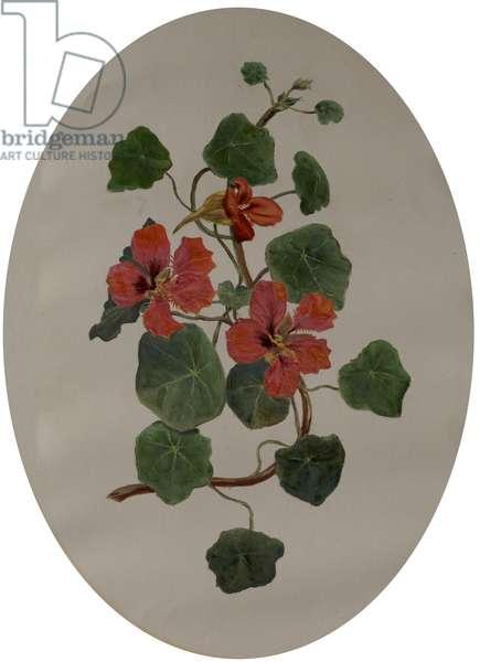 Nasturtiums, c.1870 (oil on paper)