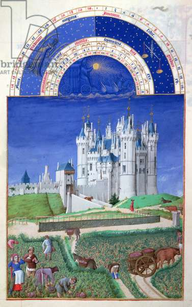 Ms 65/1284 f.9v September: harvesting grapes, from the 'Tres Riches Heures du Duc de Berry' (vellum) (for facsimile copy see 65828)
