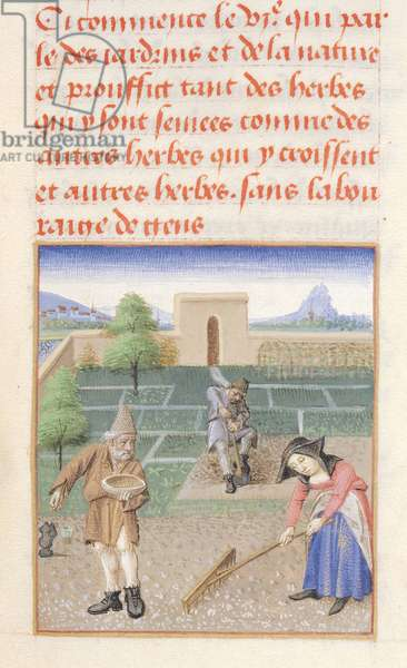 Ms 340/603 Sowing the Seed, from 'Le Rustican' by Pietro de Crescenzi (1230-1320) c.1460 (vellum)