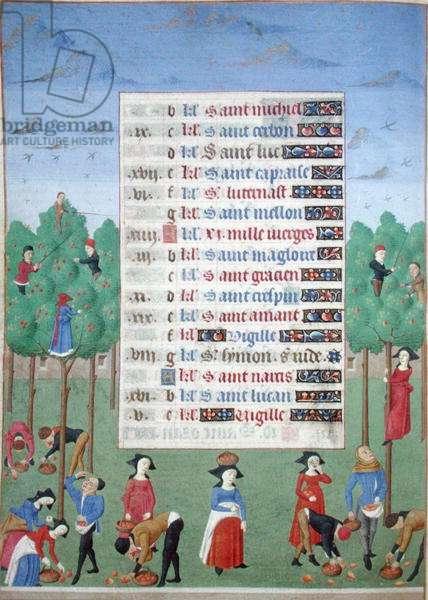 Ms 76/1362 fol.10v October: Picking Fruit, from the 'Heures de la Duchesse du Bourgogne', c.1450 (vellum)