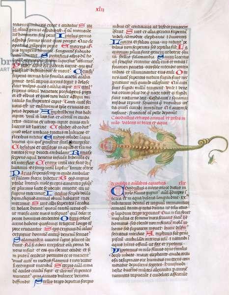 Ms 724/1596 fol.42r Text with an illustration of a crocodile, from 'Liber Floridus' by Lambert de Saint-Omer, c.1448 (vellum)