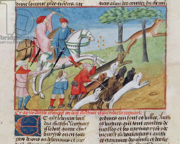 Ms 367/480 fol.70 Fox hunting, from 'Livre de la Chasse' by Gaston Phébus de Foix (vellum)