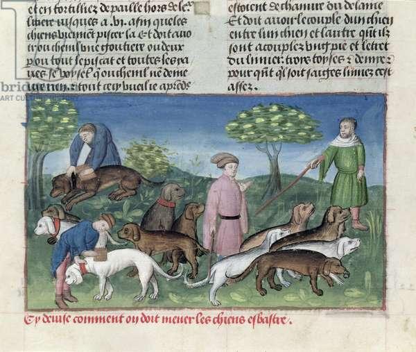 Ms 367/480 fol.33v Servants Walking the Dogs, from the 'Livre de la Chasse' by Gaston Phebus de Foix (1331-91) (vellum)
