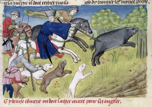 Ms 367/480 fol.50 The Boar Hunt, from the 'Livre de la Chasse' by Gaston Phebus de Foix (1331-91) (vellum)