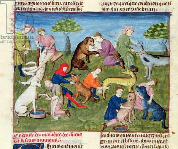 Ms 367/480 fol.22v Caring for the Hounds, from the 'Livre de la Chasse' by Gaston Phebus de Foix (1331-91) (vellum)