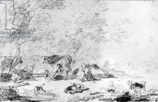 Woman milking a cow in the middle of a herd (black stone pencil)