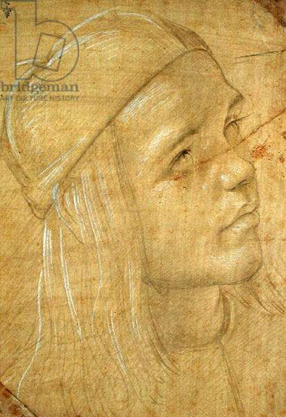 Head of a young man, c.1480 (pencil with white chalk on paper)