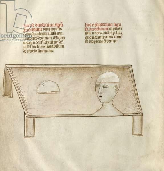 Ms 334/569 fig.12 Cranium, from 'Liber notabilium Philippi Septimi, francorum regis, a libris Galieni extractus', by Guy of Pavia, 1345 (vellum)