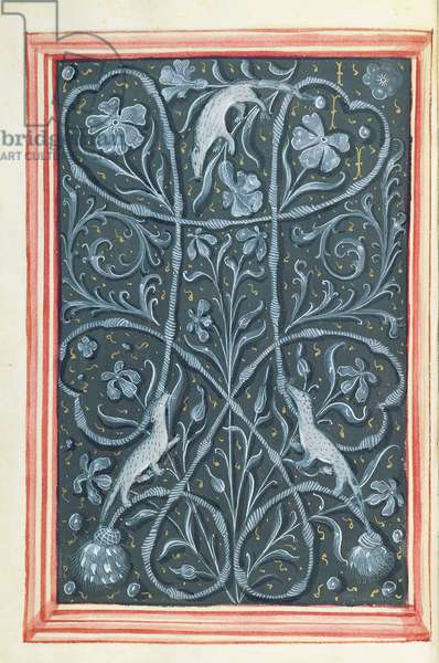 Ms 388/1475 fol.5v, Stoats and drawstring on grey, from Recueil de Miniatures (vellum)