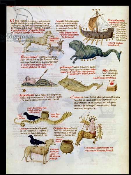 Ms 724/1596 fol.64v The Constellations: Canus, Lepus, Cetus, Navis, Pisces, Hydra, Centaur, from 'Liber Floridus' by Lambert de Saint-Omer, c.1448 (vellum)