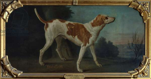 'Briador', a Dog from the Conde Pack (oil on canvas)