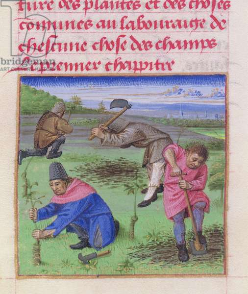 Ms 340/603 fol.3 Digging and Planting, from 'Le Rustican' by Pietro de Crescenzi (1230-1320) c.1460 (vellum)