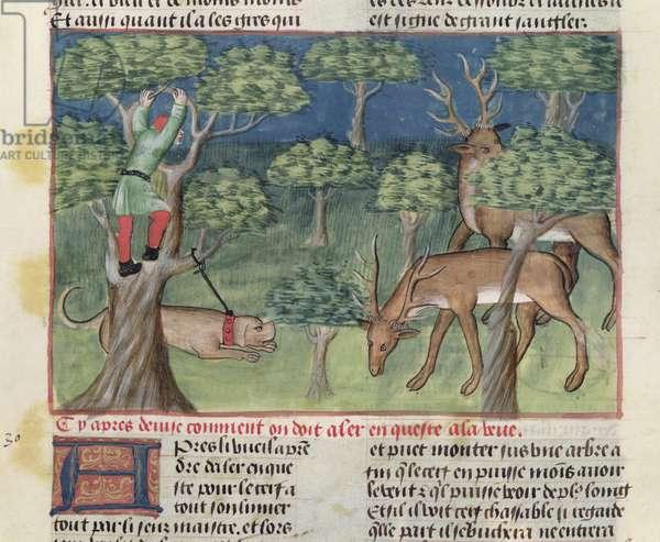 Ms 367/480 fol.37 A Huntsman in a Tree Spotting Two Stags, from the 'Livre de la Chasse' by Gaston Phebus de Foix (1331-91) (vellum)