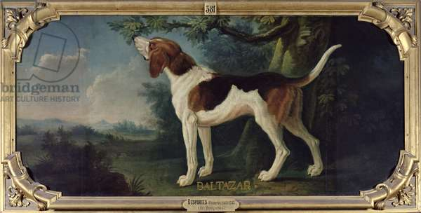'Baltazar', a Dog from the Conde Pack (oil on canvas)