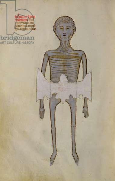Ms 334/569 fig.4 Anatomical figure from, 'Liber notabilium Philippi Septimi, francorum regis, a libris Galieni extractus', by Guy of Pavia, 1345 (vellum)