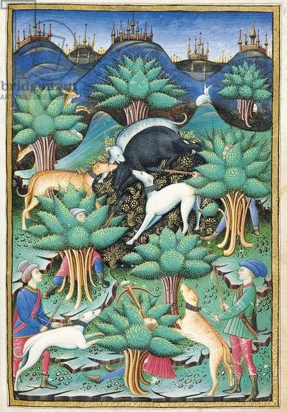 Ms 368/1375 fol.85r The Boar Hunt, from Traites de Fauconnerie et de Venerie, 1459 (vellum)