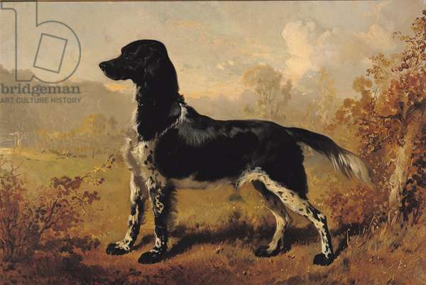 Portrait of a Dog belonging to Henri of Orleans (1822-97) Duke of Aumale (oil on canvas)