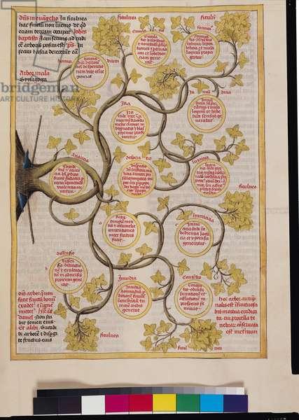 Ms 724/1596 Fol.155v The Tree of Evil, from 'Liber Floridus' by Lambert de Saint-Omer, c.1448 (vellum)