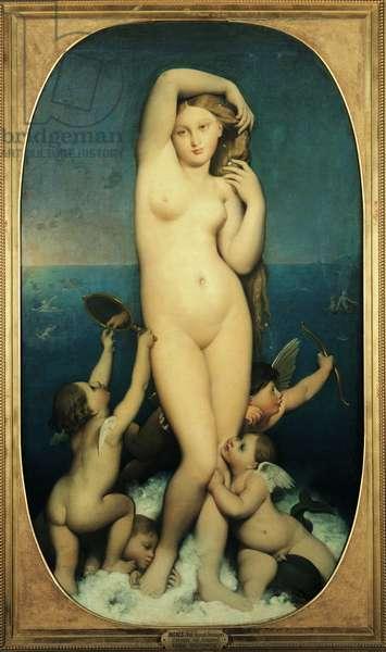 Venus Anadyomene (oil on canvas)