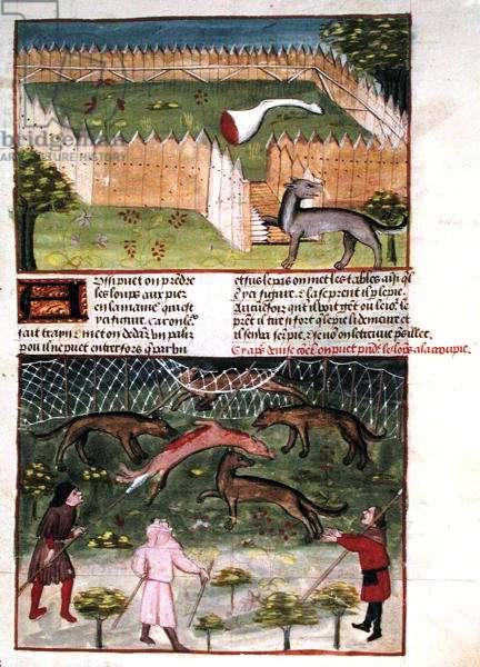 Ms 367/480 Trapping Wolves, from the 'Livre de la Chasse' by Gaston Phebus de Foix (1331-91) (vellum)