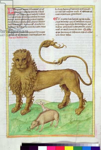 Ms 724/1596 Fol.38v The Lion and the Swine, from 'Liber Floridus' by Lambert de Saint-Omer, c.1448 (vellum)