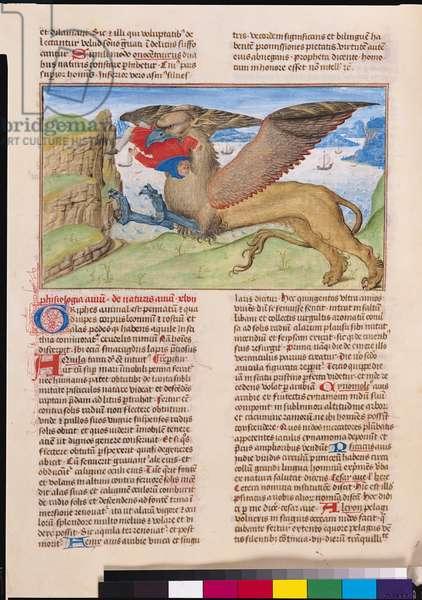 Ms 724/1596 f.40v A Griffin Devouring a Man, from 'Liber Floridus' by Lambert de Saint-Omer, c.1448 (vellum)