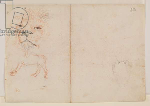 Head of a lion (verso), 18th or 19th century (red & black chalk on laid paper) [see 5948392]