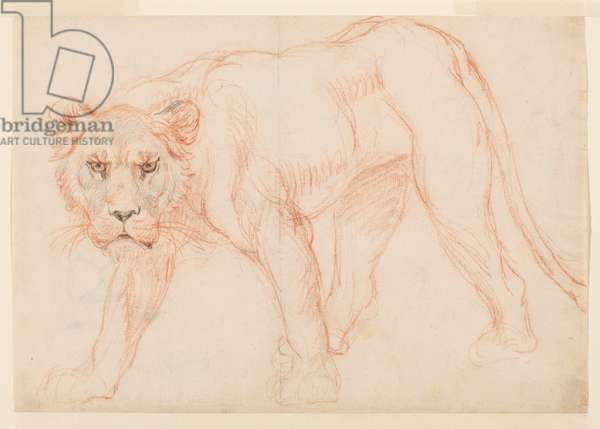 Lioness prowling (recto), 18th or 19th century (red and black chalk on laid paper) [see 5948391]